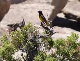 California birds images California native birds and their plants a drought tolerant jpg