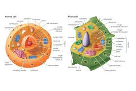 ten facts about cells and cell function