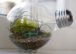 20 creative terrarium containers 2017