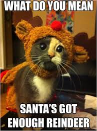 Cat In The Hat Meme - cat in the hat meme amazing photographs what do you mean santa s got