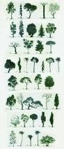 different trees you can never have enough drawings of trees