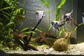 aquarium filtration 101 let u0027s explore the basic types of aquarium
