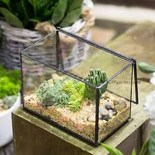 footed rectangle clear glass geometric terrarium box succulent