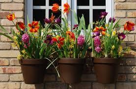 amazon com flower pot klips 12 pack plant hooks patio