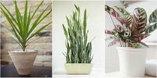 indoor plants that need no light 10 robust houseplants that can survive in even the darkest corner