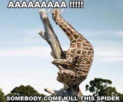 Funny Spider Meme - 20 most funniest giraffe meme pictures and photos