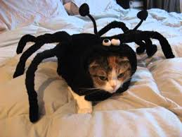 cat costume for halloween halloween costumes for cats only youtube