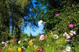 backyard gardener gardening information