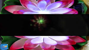 Solar Floating Pond Lights by New Solar Powered Led Lilly Pad Pond Lights From Aquael Youtube