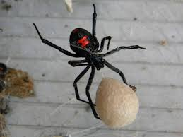 black widow spider with egg sac charlotte u0027s web props
