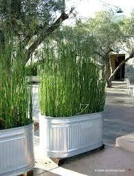 Backyard Patio Landscaping Ideas Ideas For Backyard Privacy U2013 Mobiledave Me