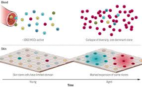 stem cells and healthy aging science