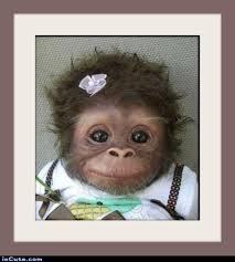 Chimp Meme - 25 monkeys wearing clothes smosh