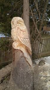 rough owl arrives in our backyard cancarve com