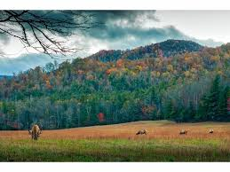 leaf peeping 2017 u0027s blue ridge mountains put show