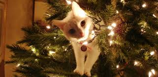 pet christmas how to keep pets safe at christmas today s homeowner