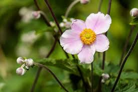 flowers images pink flowers free pictures on pixabay