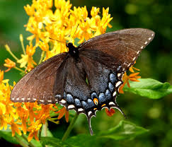 12 rare sighted and appealing butterfly species