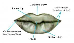 portrait drawing for the ultimate beginner the lips feltmagnet