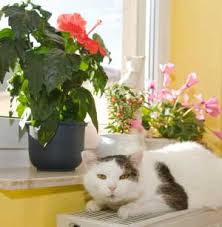 photos of poisonous plants and flowers for cats