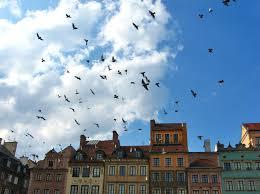 ameisen auf dem balkon fliegende ameisen auf dem balkon möbel und heimat design inspiration
