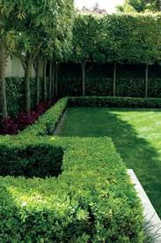 Fence Line Landscaping by Fence Line Ornamental Pear Jasmine And Grass Front Yard