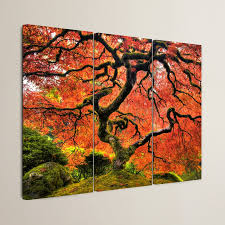 darby home co japanese maple tree by black 3