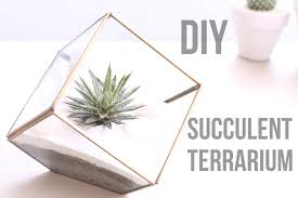 diy succulent diy succulent terrarium ideas youtube