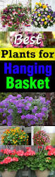 Best Plants For No Sunlight Best Plants For Hanging Baskets Balcony Garden Web