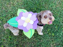 halloween dog background diy pet halloween costume ideas hgtv u0027s decorating u0026 design blog