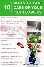 flower food packets 10 ways to take care of your cut flowers pam s posies