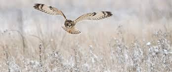 bird identifier british garden birds and many more rspb
