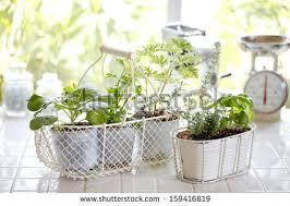 Windowsill Greenhouse Greenhouse Indoor Garden Stock Images Royalty Free Images