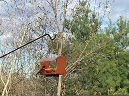 category oriole backyard birds latham new york nature shop