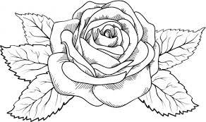 imagenes para colorear rosas dibujo para colorear rosa preciosa con ramas