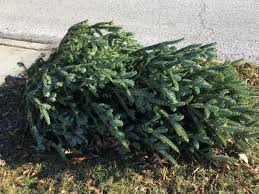 Christmas Tree Pick Up Ditch Your Real Christmas Tree In Basking Ridge Basking Ridge