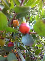 australian native plants for clay soil top 5 indigenous trees for clay soil grow wild
