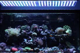 best lighting for corals aquarium led lighting 2017 2018 orphek
