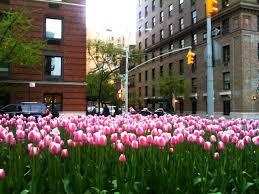flowers nyc flowers on park avenue ny new york city photos