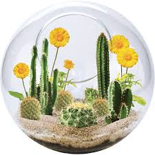 mini desertscape cactus growing glass terrarium kit educational