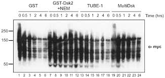 Anti Flag Affinity Gel Multidsk A Ubiquitin Specific Affinity Resin