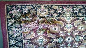 Kill Carpet Mold What To Know About Moldy Rugs The Original Ayoub Carpet Service