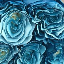 Teal Roses The Bergen Rose Lady U2013 Farm To Table Roses