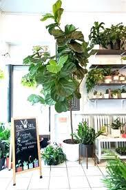 best indoor house plants best indoor house plants good indoor plants for bedroom good house
