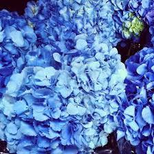 botanics florist sydney blog