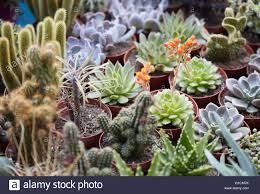 succulent plants collection in small pots stock photo royalty