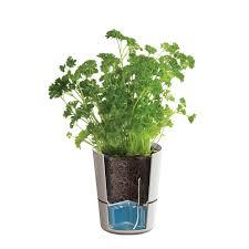 self watering garden pots stunning new gregarder self watering