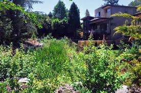 native plants for rain gardens summerwell summerwell