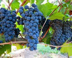 types of red colors the 8 most common types of red wine red wine types explained