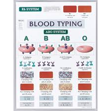 blood typing chart carolina com